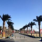 北京润正庄园仿真海藻树