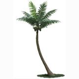 公司展示仿真椰子树图片
