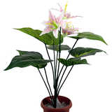 0078 葫芦芋仿真盆景虎兰 8叶3花