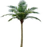 单个仿真椰子树