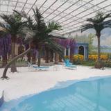 盐城滨海月亮湾椰子树02