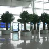 机场仿真榕树01